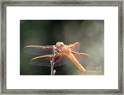 Dragon Fly Framed Print by Laura Paine