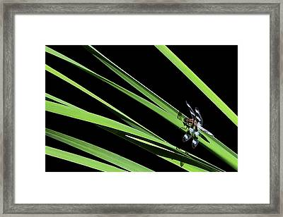 Dragon Resting On Blades Framed Print