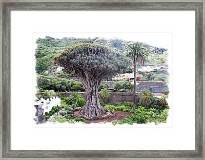 Dragon Tree Framed Print by Ha Ko