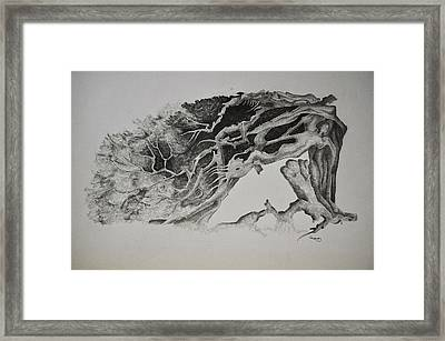 Dragon Tree With People Framed Print by Glenn Calloway