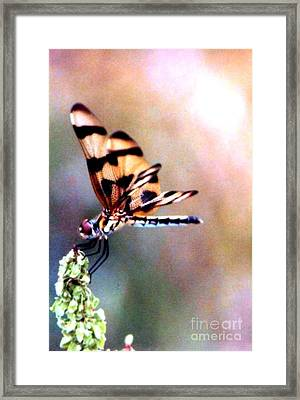Framed Print featuring the photograph Dragon Wings by Michael Hoard