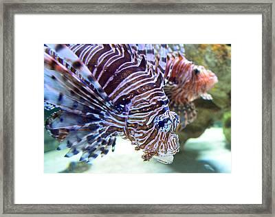 Dragonfish In Tandem Framed Print by Sandi OReilly