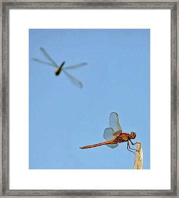 Framed Print featuring the photograph Dragonflies by Jim Whalen