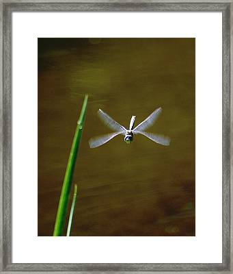 Framed Print featuring the photograph Dragonflight by Ben Upham III