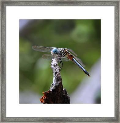 Dragonfly 02 Framed Print by Leon Hollins III
