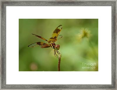 Framed Print featuring the photograph Dragonfly 2 by Olga Hamilton
