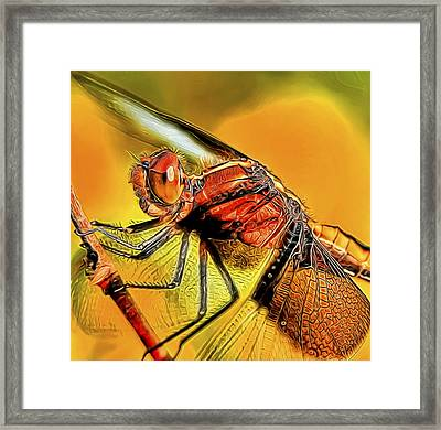 Dragonfly 2 Framed Print by William Horden