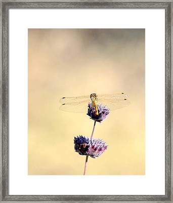 Framed Print featuring the photograph Dragonfly by AJ  Schibig