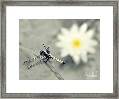 Dragonfly And Water Lily Framed Print by Sharon Woerner