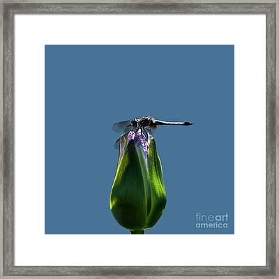 Dragonfly Appreciates A Flower Framed Print by Byron Varvarigos