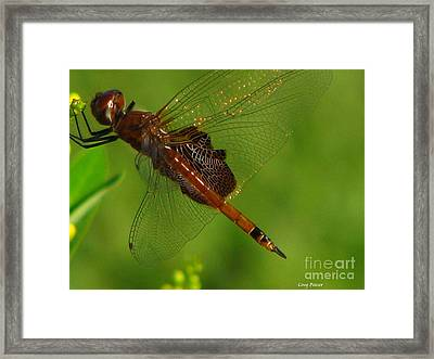 Dragonfly Art 2 Framed Print by Greg Patzer
