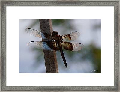 Dragonfly At Rest Framed Print by Mick Anderson