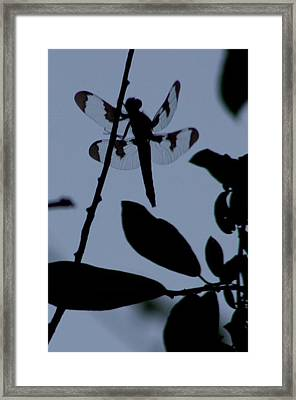 Dragonfly Blue Framed Print by Sarah Boyd