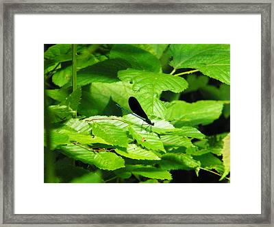 Dragonfly Framed Print by Brittany Gandee