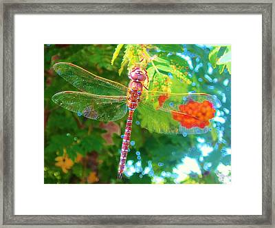 Dragonfly Framed Print by Cathy Long