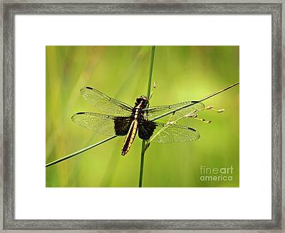 Dragonfly Cross Roads Framed Print