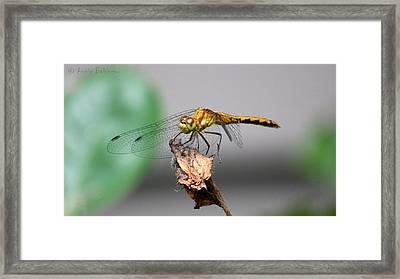 Dragonfly Dame Framed Print by Anne Babineau