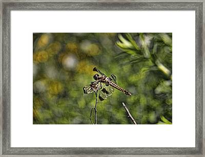 Dragonfly Framed Print by Daniel Sheldon