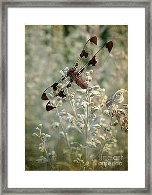 Dragonfly Framed Print by Darren Fisher