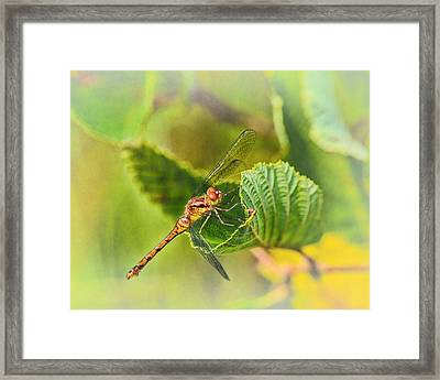 Dragonfly Days II Framed Print by Susan Capuano