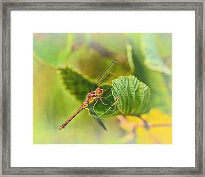 Dragonfly Days II Framed Print