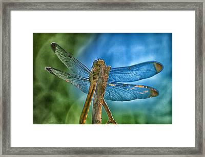 Framed Print featuring the photograph Dragonfly by Dennis Baswell