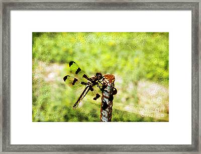 Dragonfly Eating Breakfast Framed Print by Andee Design