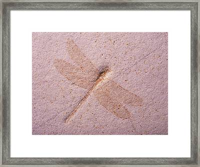 Dragonfly Fossil Framed Print by Martin Land/science Photo Library