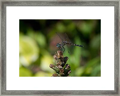 Framed Print featuring the photograph Dragonfly by Greg Graham
