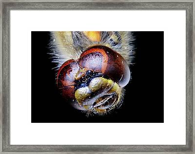 Dragonfly Head Framed Print by Heiti Paves