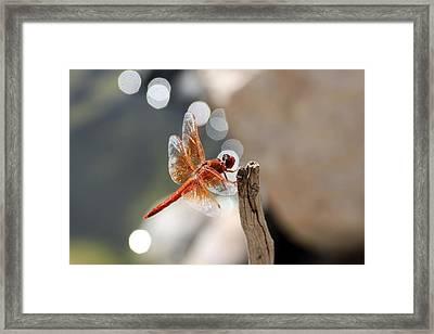 Dragonfly Highlights Framed Print