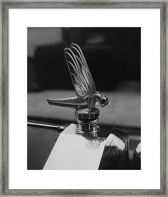 Dragonfly Hood Ornament Framed Print