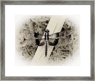 Dragonfly In Sepia Framed Print by Tony Grider