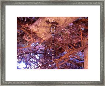 Dragonfly In Spruce Framed Print by Cathy Long