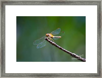 Dragonfly In The Sun Framed Print