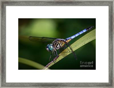 Dragonfly In The Wind Framed Print