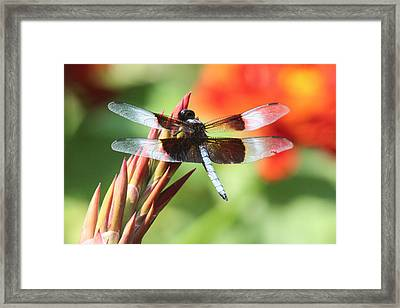 Dragonfly Framed Print by Jill Bell