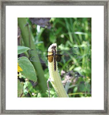 Framed Print featuring the photograph Dragonfly by Karen Silvestri