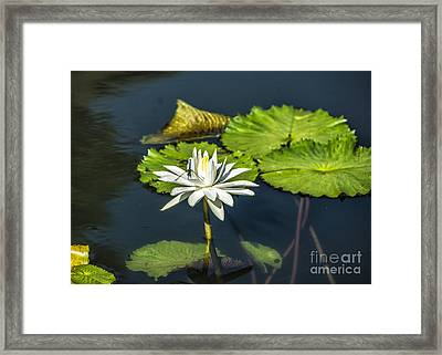 Dragonfly Kisses A Waterlily Framed Print by Terry Rowe