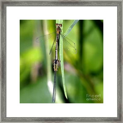 Dragonfly Landing Framed Print