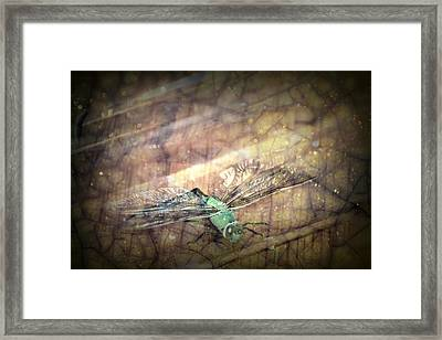 Dragonfly Leap Of Faith Framed Print by Dawna Morton