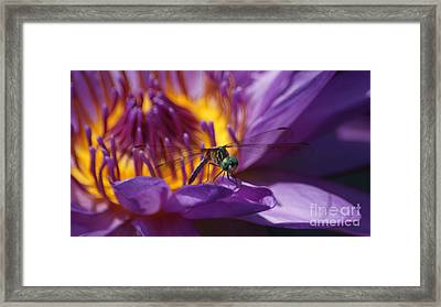 Dragonfly Looking At You...   # Framed Print by Rob Luzier