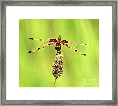 Dragonfly Magic Framed Print