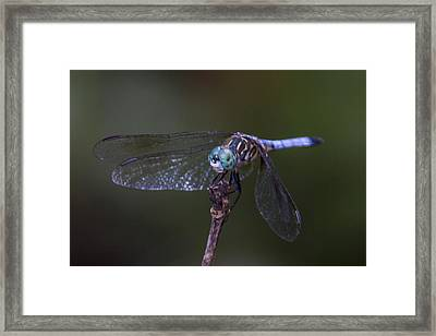 Dragonfly Framed Print by Paula Porterfield-Izzo