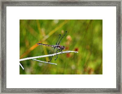 Dragonfly Perch Framed Print