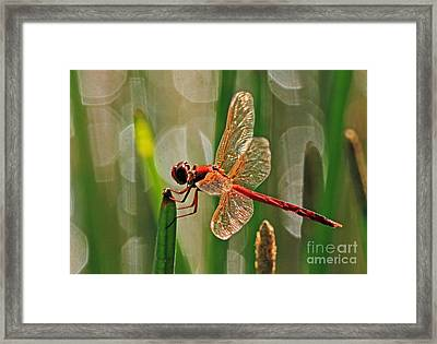Dragonfly Profile Framed Print