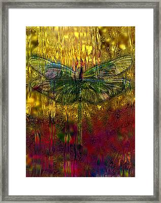 Dragonfly - Rainy Day  Framed Print