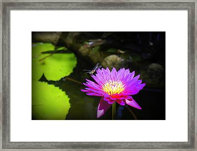 Framed Print featuring the photograph Dragonfly Resting by Laurie Perry