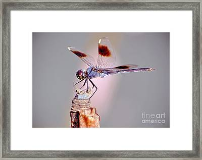 Framed Print featuring the photograph Dragonfly by Savannah Gibbs