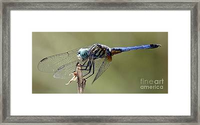 Dragonfly Smile Framed Print
